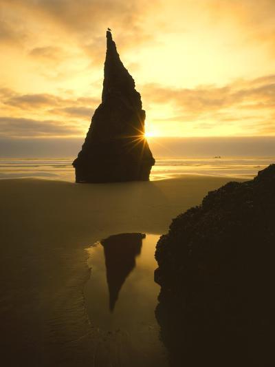 Sunset Silhouettes Seabird Atop Rock Pinnacle, Bandon Beach, Oregon, USA-Steve Terrill-Photographic Print