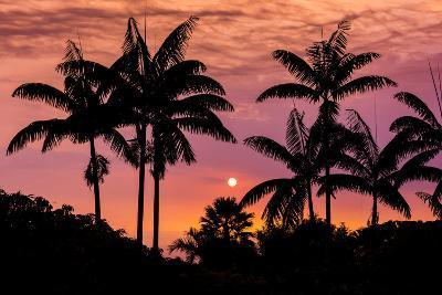 Sunset Through Silhouetted Palm Trees, Kona Coast, the Big Island, Hawaii-Russ Bishop-Photographic Print