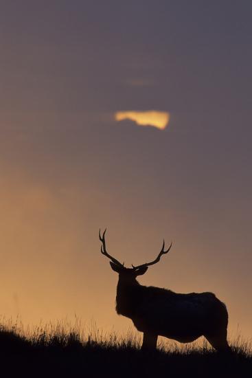 Sunset, Tule Elk Wildlife, Point Reyes National Seashore, California, USA-Gerry Reynolds-Photographic Print