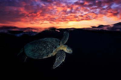 Sunset Turtle-Barathieu Gabriel-Photographic Print