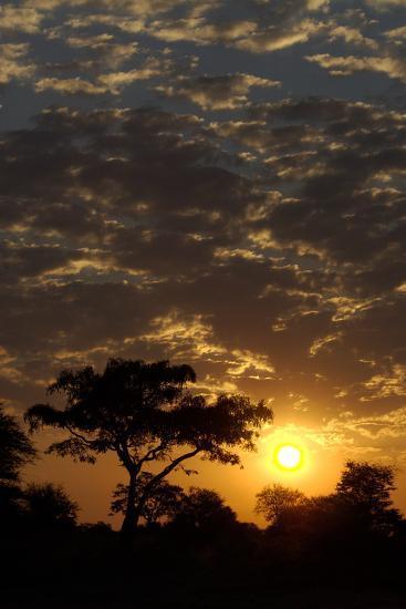Sunset, Upper Vumbura Plains, Botswana-Anne Keiser-Photographic Print