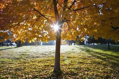 Sunshine Through a Fall Tree-Craig Tuttle-Photographic Print