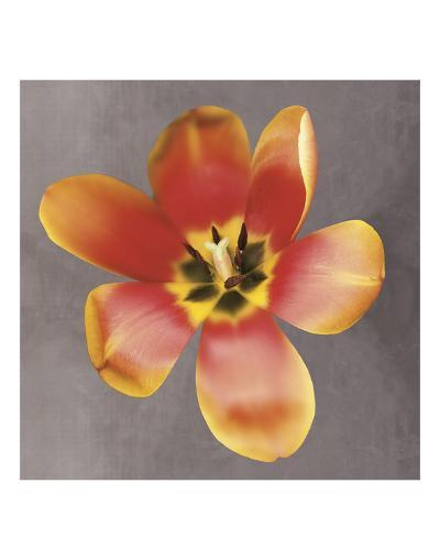 Sunshine Tulip-Erin Clark-Art Print