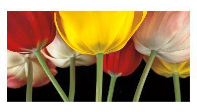Sunshine Tulips-Assaf Frank-Art Print