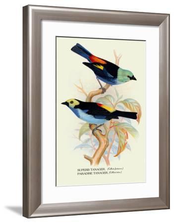 Superb Tanager, Paradise Tanager-Arthur G. Butler-Framed Art Print