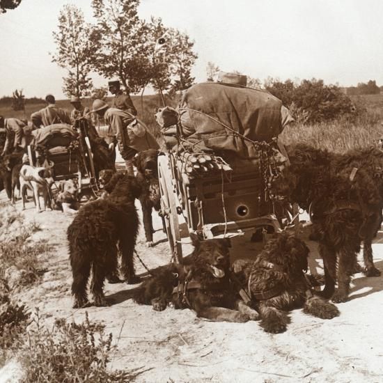 Supply dogs, c1914-c1918-Unknown-Photographic Print