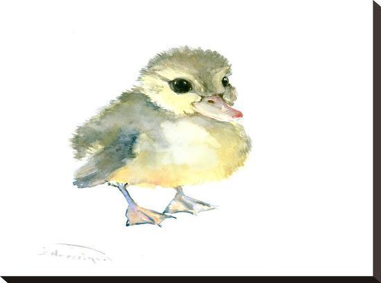 suren-nersisyan-baby-duck