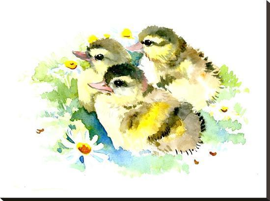 suren-nersisyan-baby-ducks