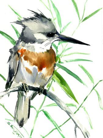 Belted Kingfisher 1
