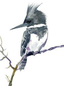 Belted Kingfisher 1 by Suren Nersisyan