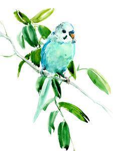 Budgie Parakeet 4 by Suren Nersisyan