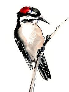 Downy Woodpecker 1 by Suren Nersisyan