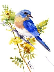 Eastern Bluebird by Suren Nersisyan
