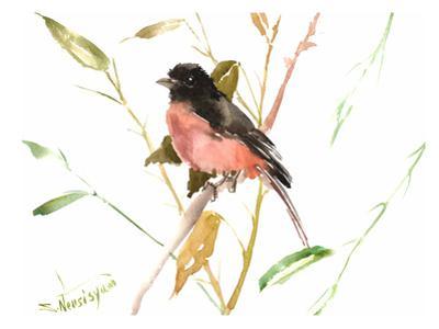 Eastern Towhee Bird