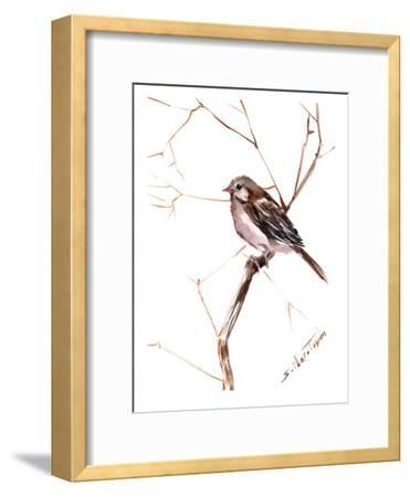 Field Sparrow 2