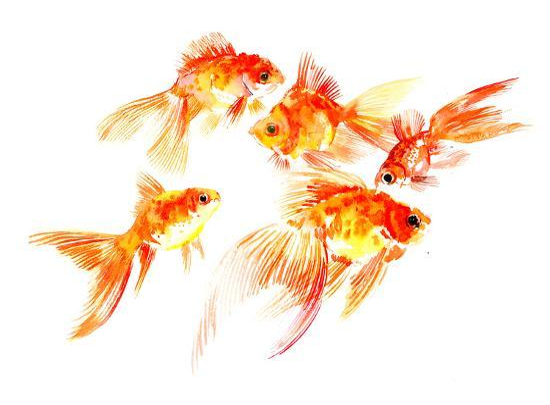 suren-nersisyan-goldfish5