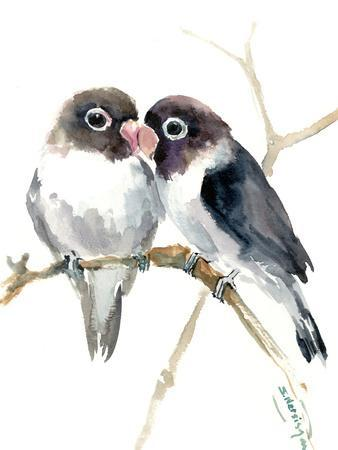 Gray Masked Lovebirds