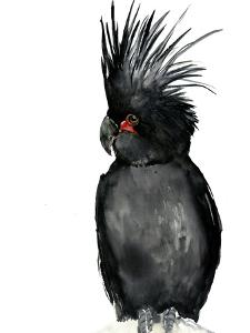Palm Cockatoo 2 by Suren Nersisyan
