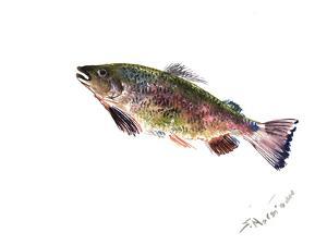 Rainbow Trout 2 by Suren Nersisyan