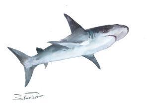 Shark 2 by Suren Nersisyan