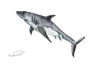 Shark by Suren Nersisyan