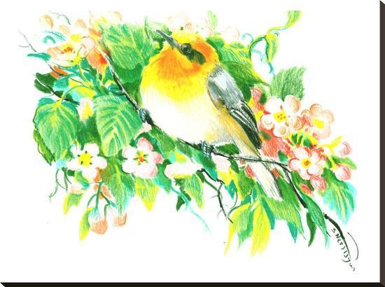 suren-nersisyan-songbird-warbler