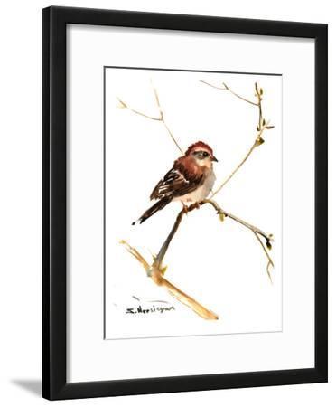 Sparrow 7