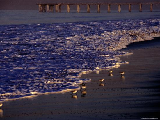 Surf Chasing Birds on Beach at Hermosa Beach-Christina Lease-Photographic Print