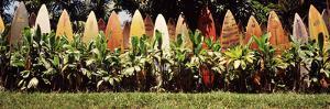 Surfboard Fence in a Garden, Maui, Hawaii, USA