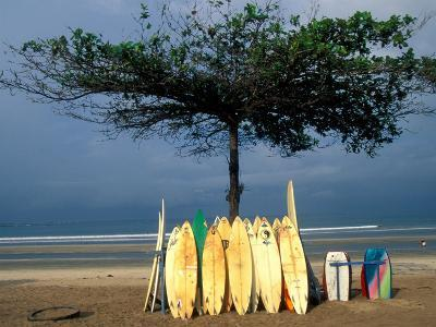 Surfboards Lean Against Lone Tree on Beach in Kuta, Bali, Indonesia-Paul Souders-Photographic Print