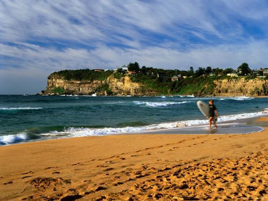 Surfer On Avalon Beach Bilgola Headland In Background Sydney New South Wales