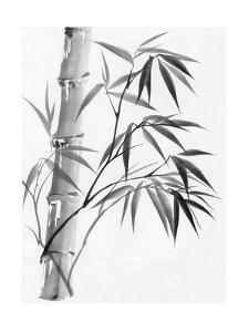 Watercolor Painting Of Bamboo by Surovtseva