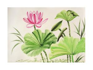 Watercolor Painting Of Pink Lotus Flower by Surovtseva