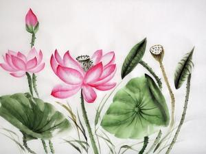 Watercolor Painting Of Pink Lotus by Surovtseva