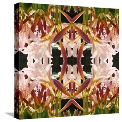 Surprise Lilies-Rose Anne Colavito-Stretched Canvas Print