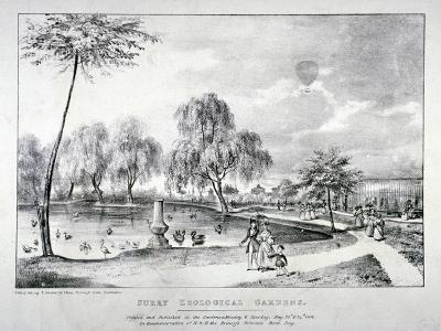 Surrey Zoological Gardens, Southwark, London, 1836-F Alvey-Giclee Print
