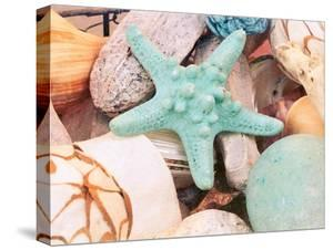 Bundle of Shells V by Susan Bryant