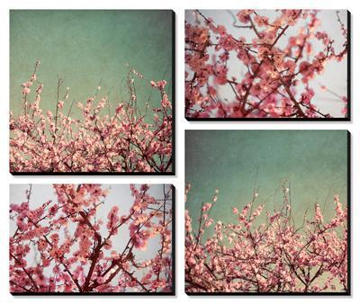 Cherry Blossoms by Susan Bryant