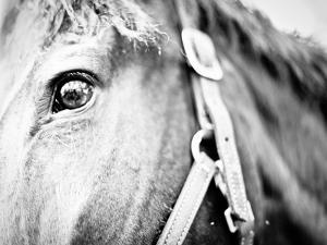 Horseback Riding I by Susan Bryant