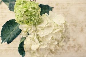 Hydrangeas I by Susan Bryant