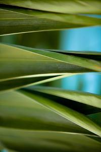 Palma III by Susan Bryant