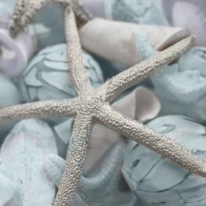 Seashells in Blue I by Susan Bryant