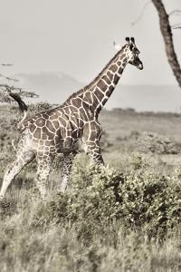 Sepia Giraffe by Susan Bryant