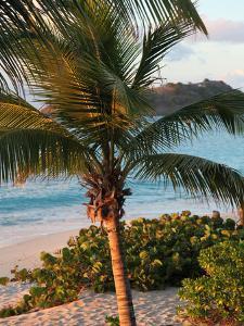 Sunset Palms I by Susan Bryant