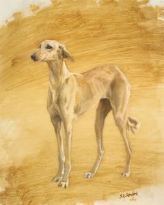 Whippet Study by Susan Crawford