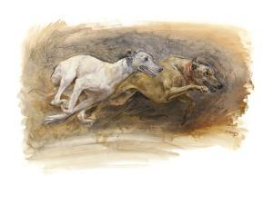 Whippets Running by Susan Crawford
