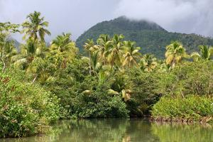 Indian River, Dominica, Eastern Caribbean, West Indies by Susan Degginger