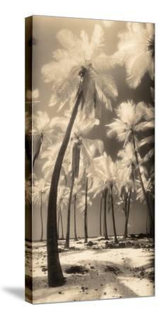 Palm Shadows I