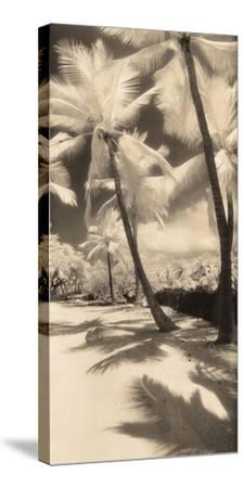 Palm Shadows II