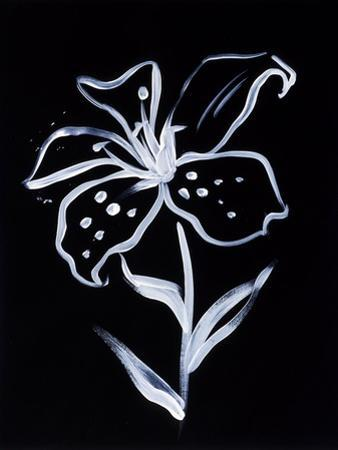 Shadow Lily by Susan Gillette